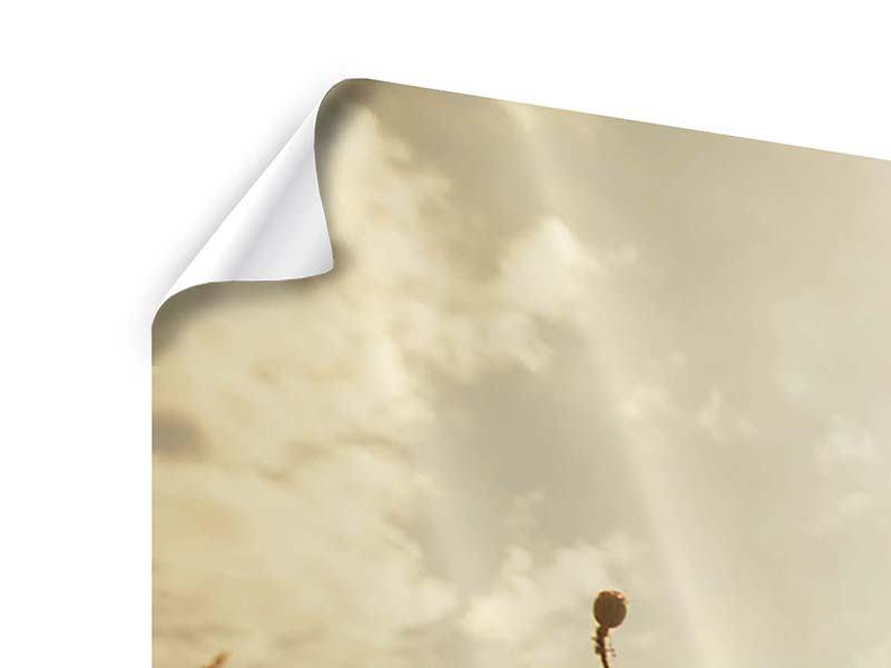 Poster 4-teilig Das Mohnfeld bei Sonnenaufgang
