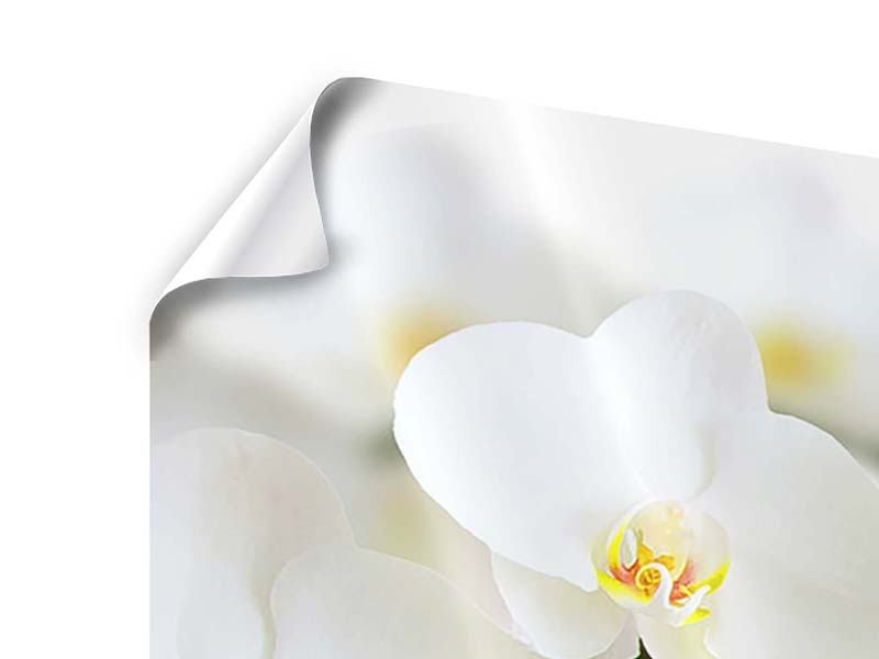 Poster 4-teilig Weisse Orchideen