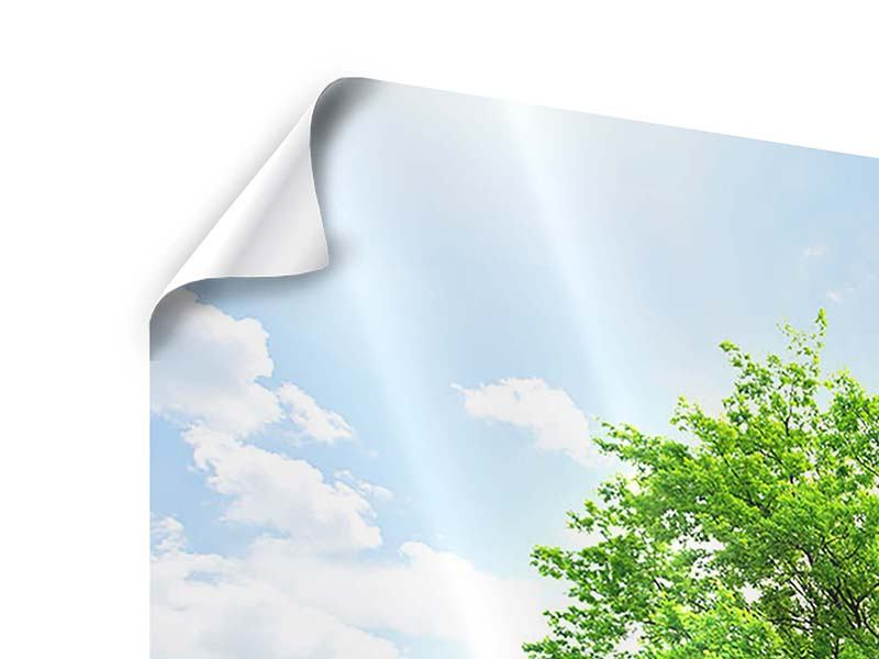 Poster 4-teilig Der Baum