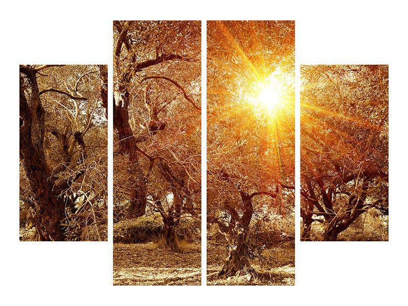 Poster 4-teilig Olivenbäume im Herbstlicht