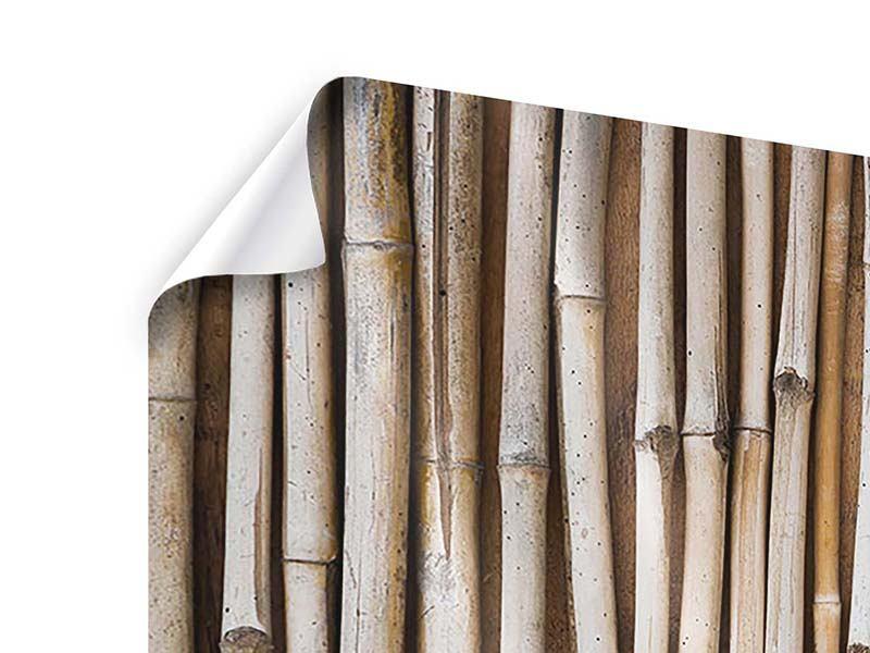 Poster 4-teilig Getrocknete Bambusrohre