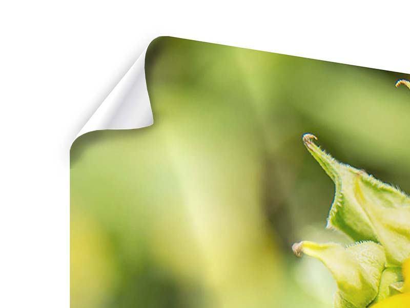 Poster 4-teilig Wilde Sonnenblume