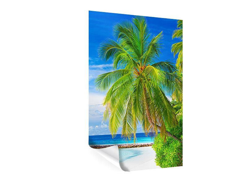 Poster Die Palme