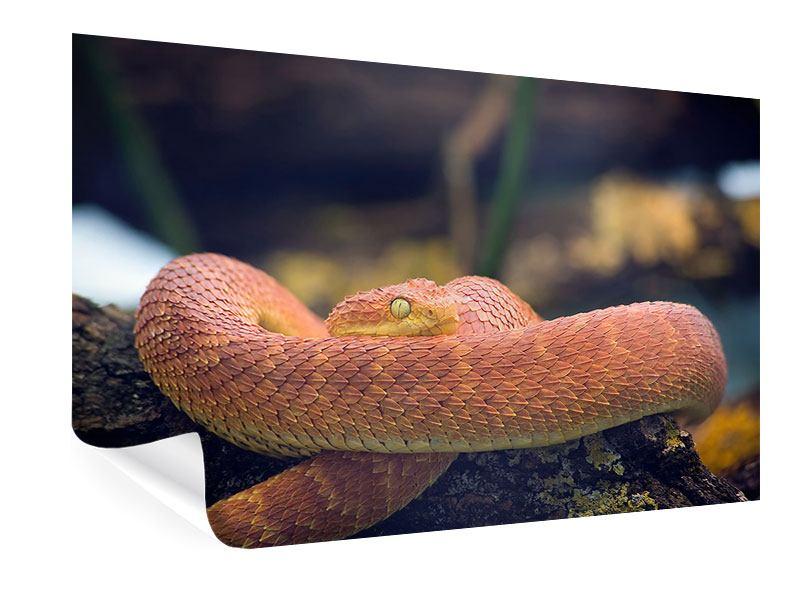 Poster Schlange