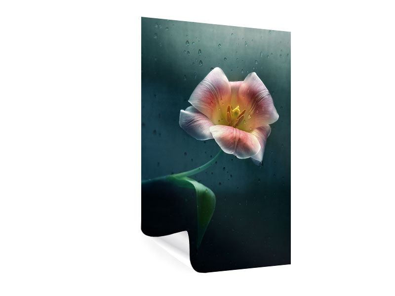 Poster Die geöffnete Tulpe