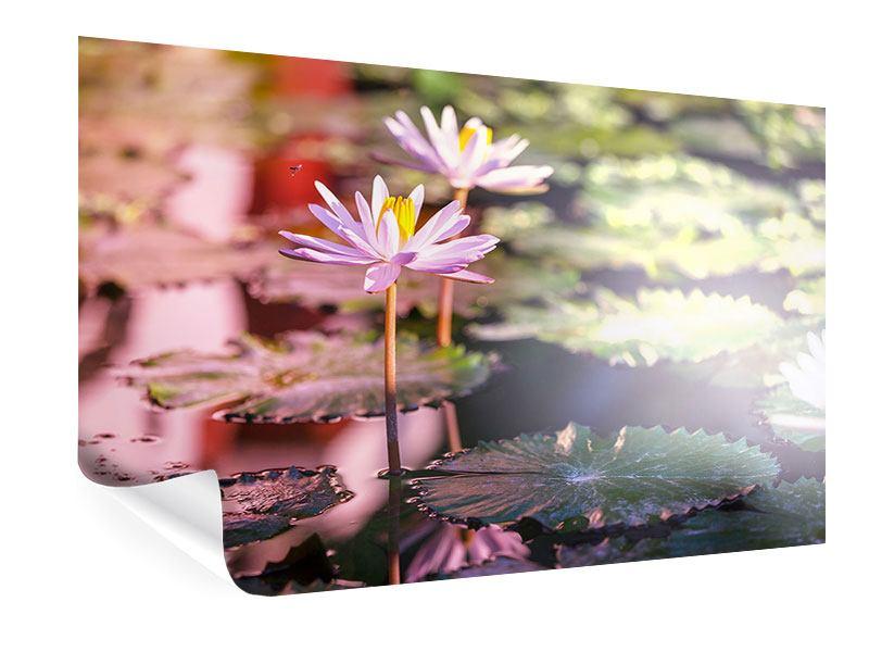 Poster Seerosen im Teich