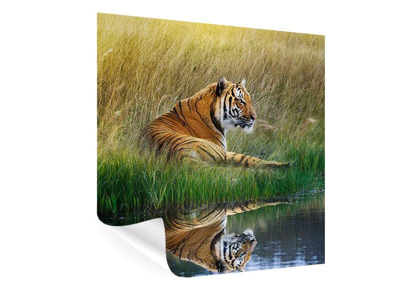 Poster Der Tiger