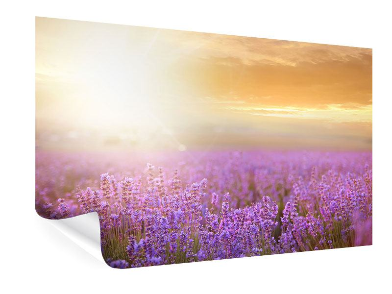 Poster Sonnenuntergang beim Lavendelfeld