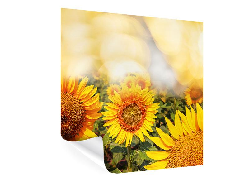 Poster Das Licht der Sonnenblumen