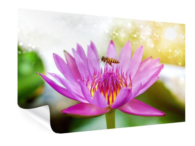 Poster Die Lotus mit Biene