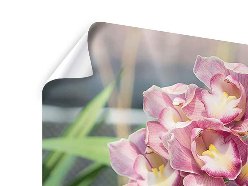 Poster Wilde Orchideen