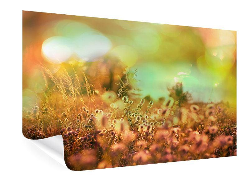 Poster Blumenwiese in der Abenddämmerung