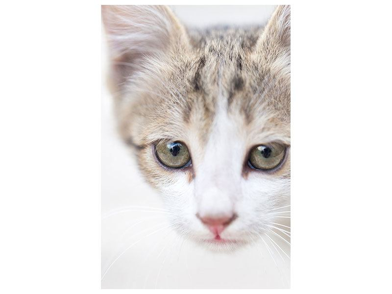 Poster Katzenkind