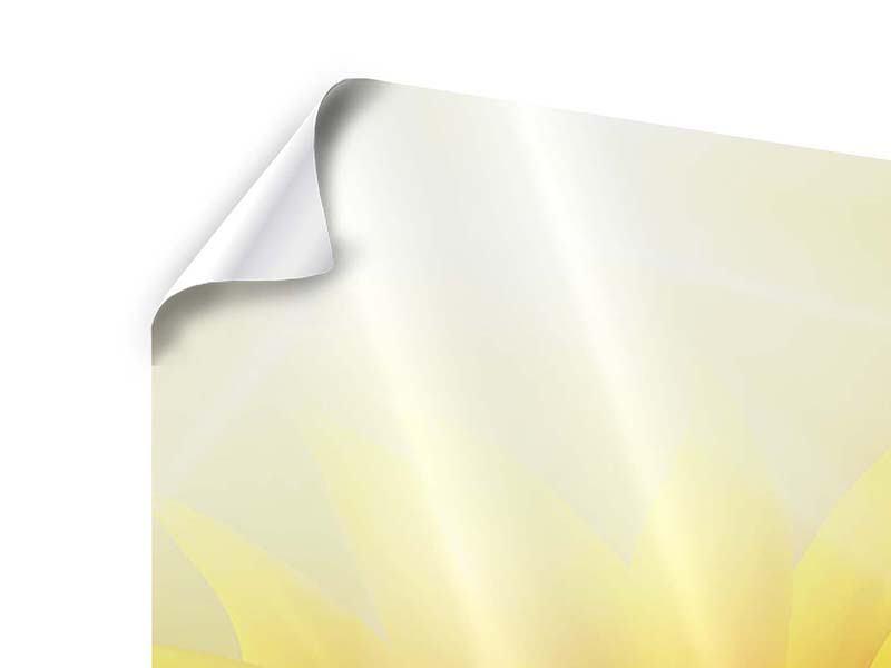 Poster Sonnenblume im Morgentau