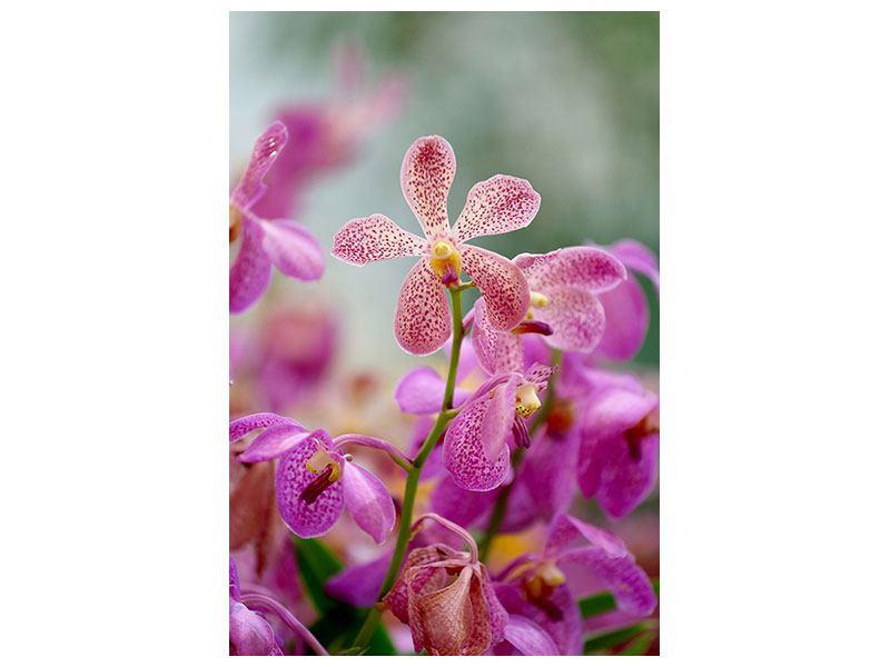 Poster Orchidee Pünktchen