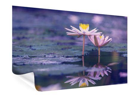 Poster Lotus Duo im Sonnenaufgang