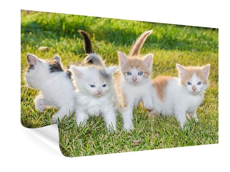 Poster Katzenbabys