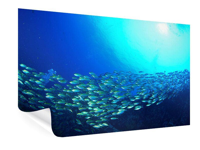 Poster Fischschwarm