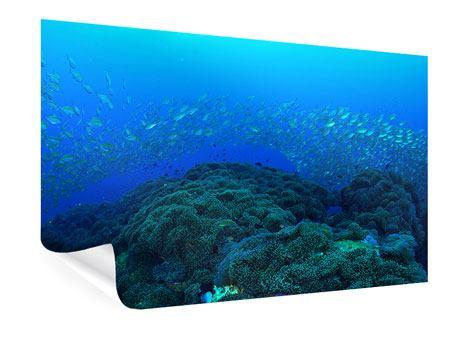 Poster Fischschwärme