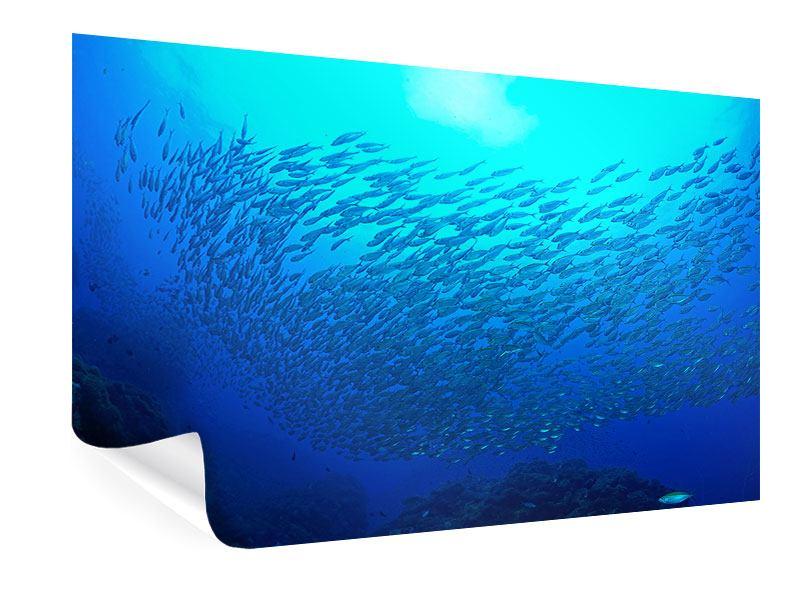 Poster Fischwelt