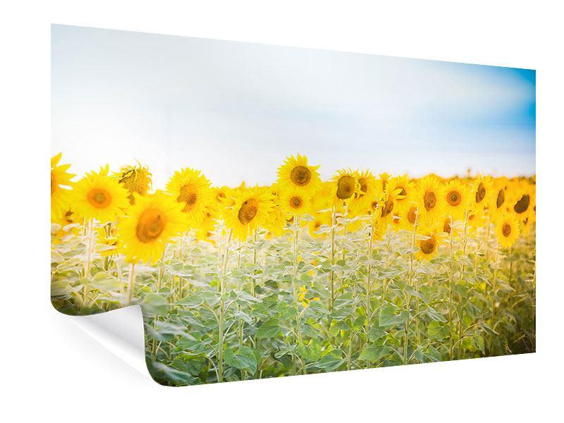 Poster Im Sonnenblumenfeld