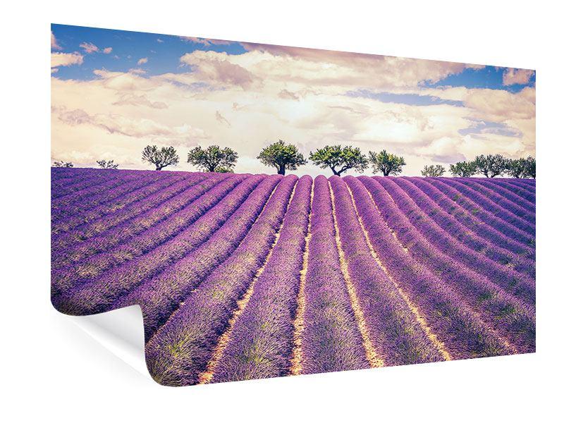Poster Das Lavendelfeld
