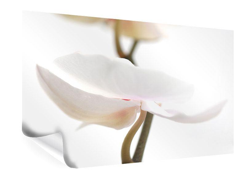 Poster XXL Orchideenblüte