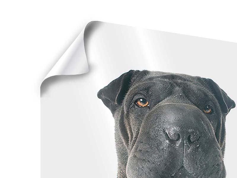 Poster Der Mastiff