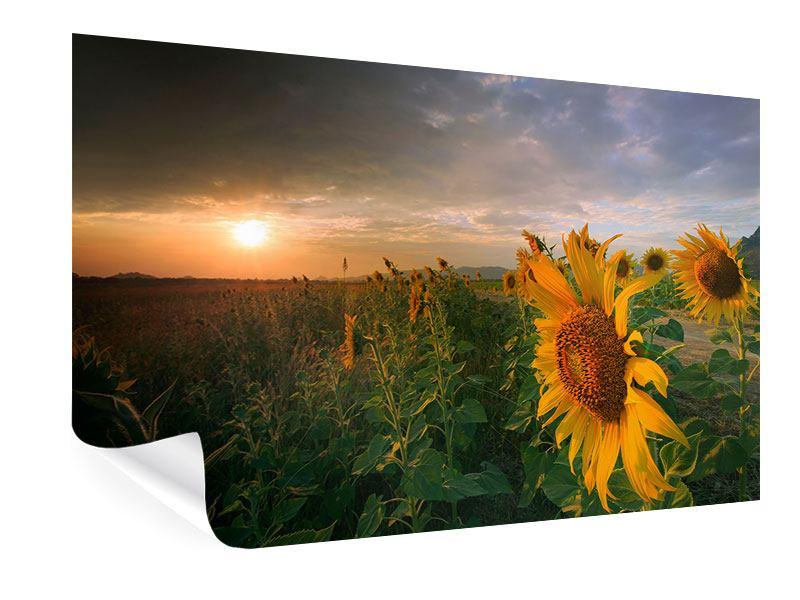 Poster Sonnenblumen im Lichtspiel