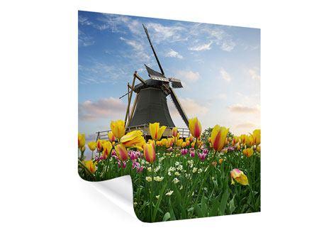 Poster Die Windmühle mit den Tulpen