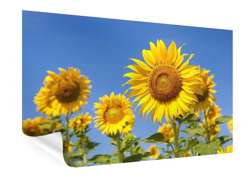 Poster Himmlische Sonnenblumen