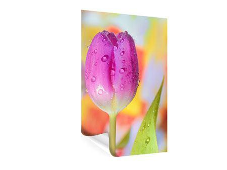 Poster Die Tulpe im Morgentau