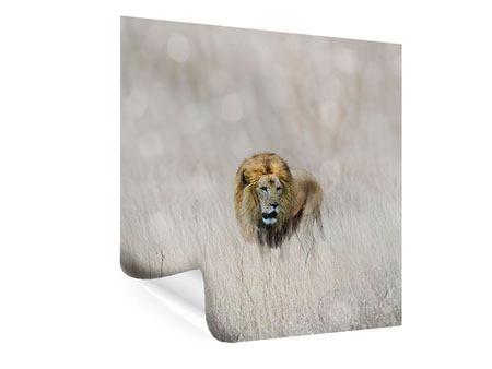 Poster Der Löwe