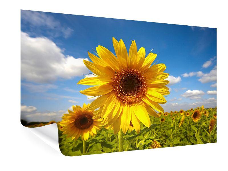 Poster Das Feld der Sonnenblumen