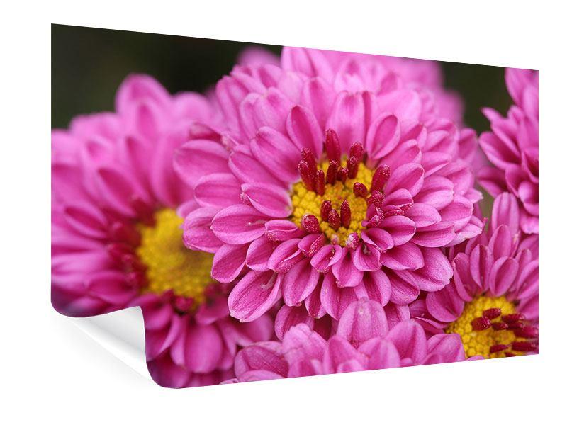 Poster Chrysanthemen