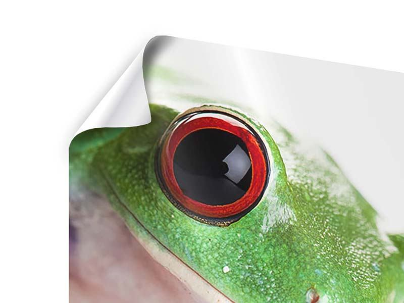 Poster Frosch Close up