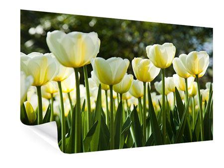 Poster Tulpen bei Sonnenuntergang