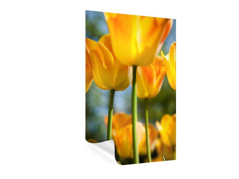 Poster Im Tulpenbeet