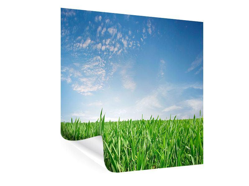 Poster Das Gras