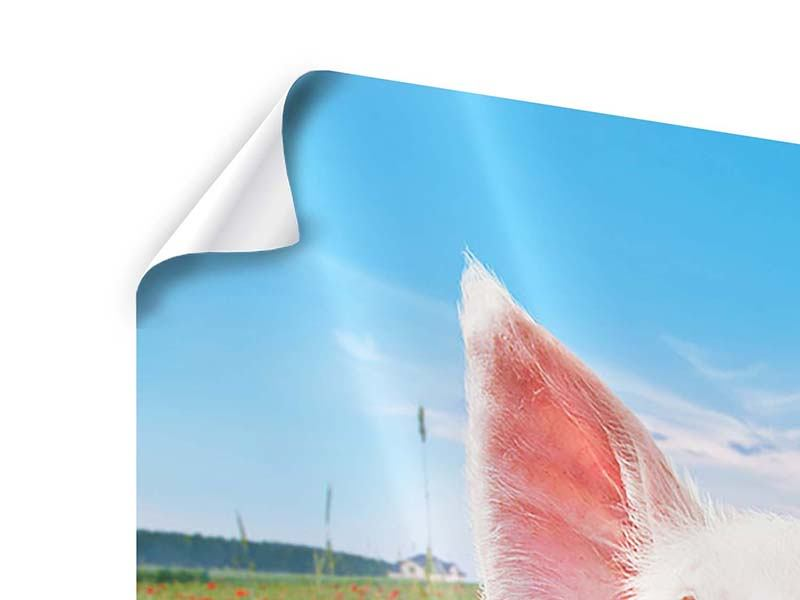 Poster Schweinchen im Glück