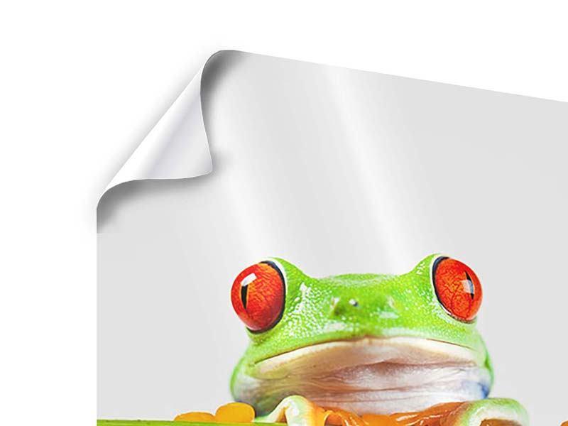 Poster Frosch-Akrobatik