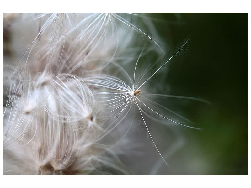 Poster Close up Blütenfasern