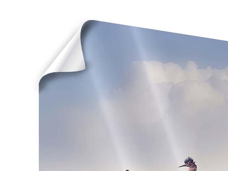Poster Arche Noah