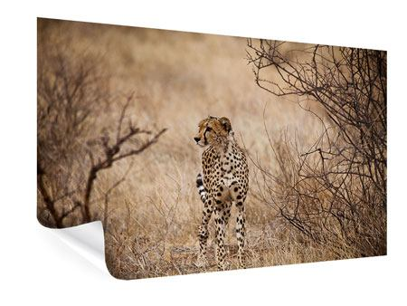 Poster Eleganter Gepard