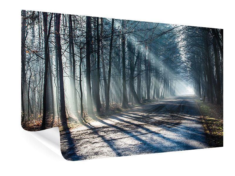 Poster Wald im Lichtstrahl