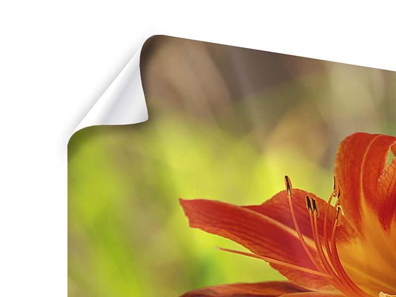Poster Lilien in der Natur