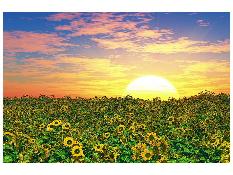 Poster Blumenpanorama bei Sonnenuntergang