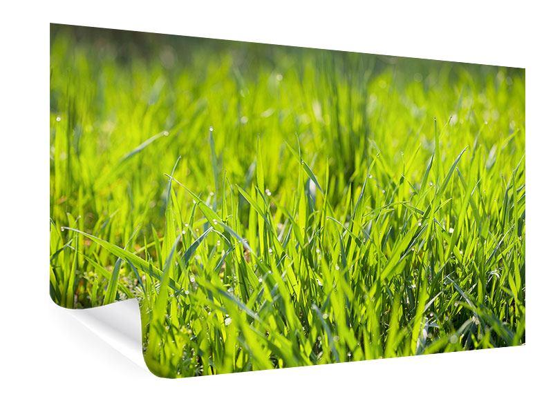 Poster Gras im Morgentau
