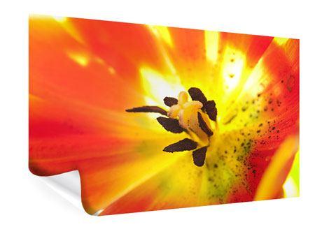 Poster Die Narbe einer Tulpe XXL