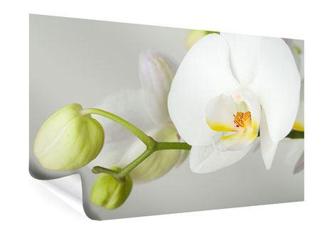 Poster Riesenorchidee